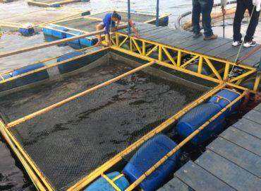 Senador Jader quer incentivar projeto de aquicultura na UFOPA