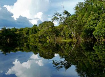 Senador Jader cobra ação do governo federal contra desmatamento na Amazônia