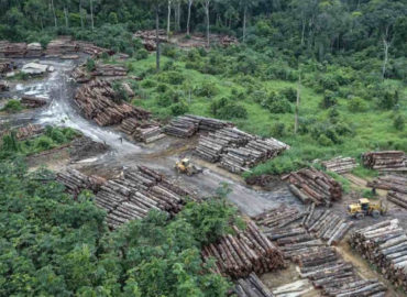 Senador Jader cobra resposta de Salles sobre combate ao desmatamento