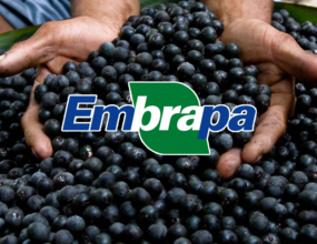 """""""É urgente manter recursos para a Embrapa"""" alerta o senador Jader"""